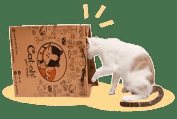 gato con bolsa de compra en pet shop