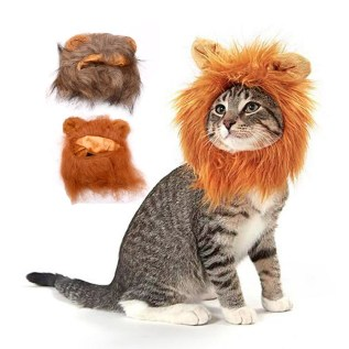 melena leon gato en miraflores lima peru