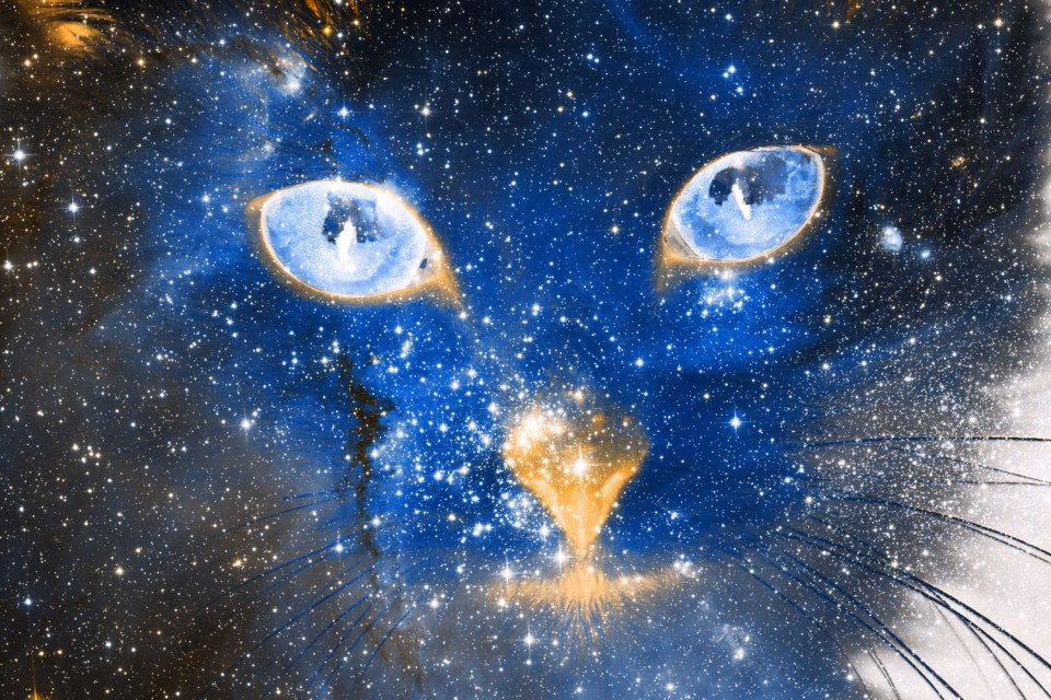 Large blue celestial cat