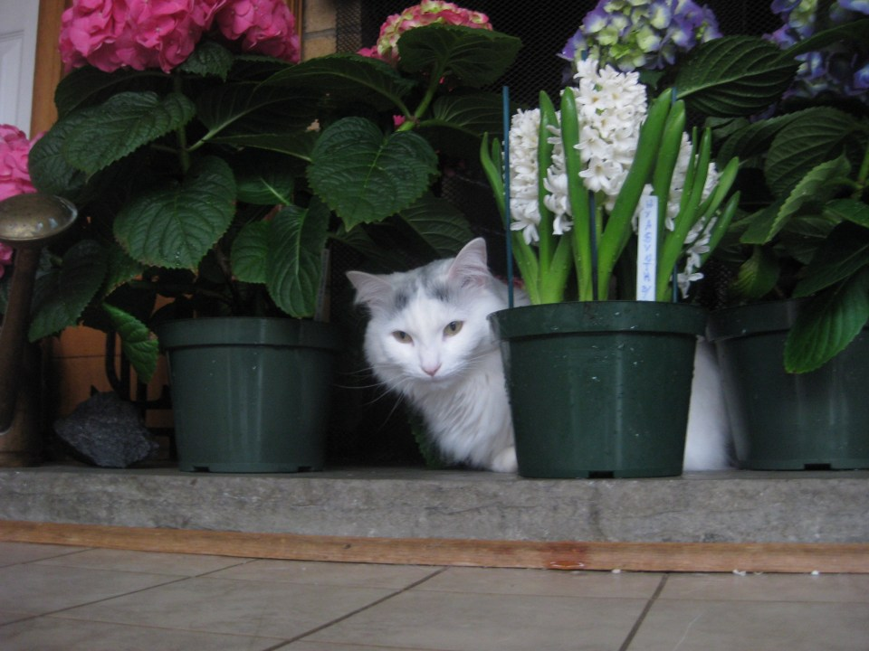 Cat sitting with spring flowers