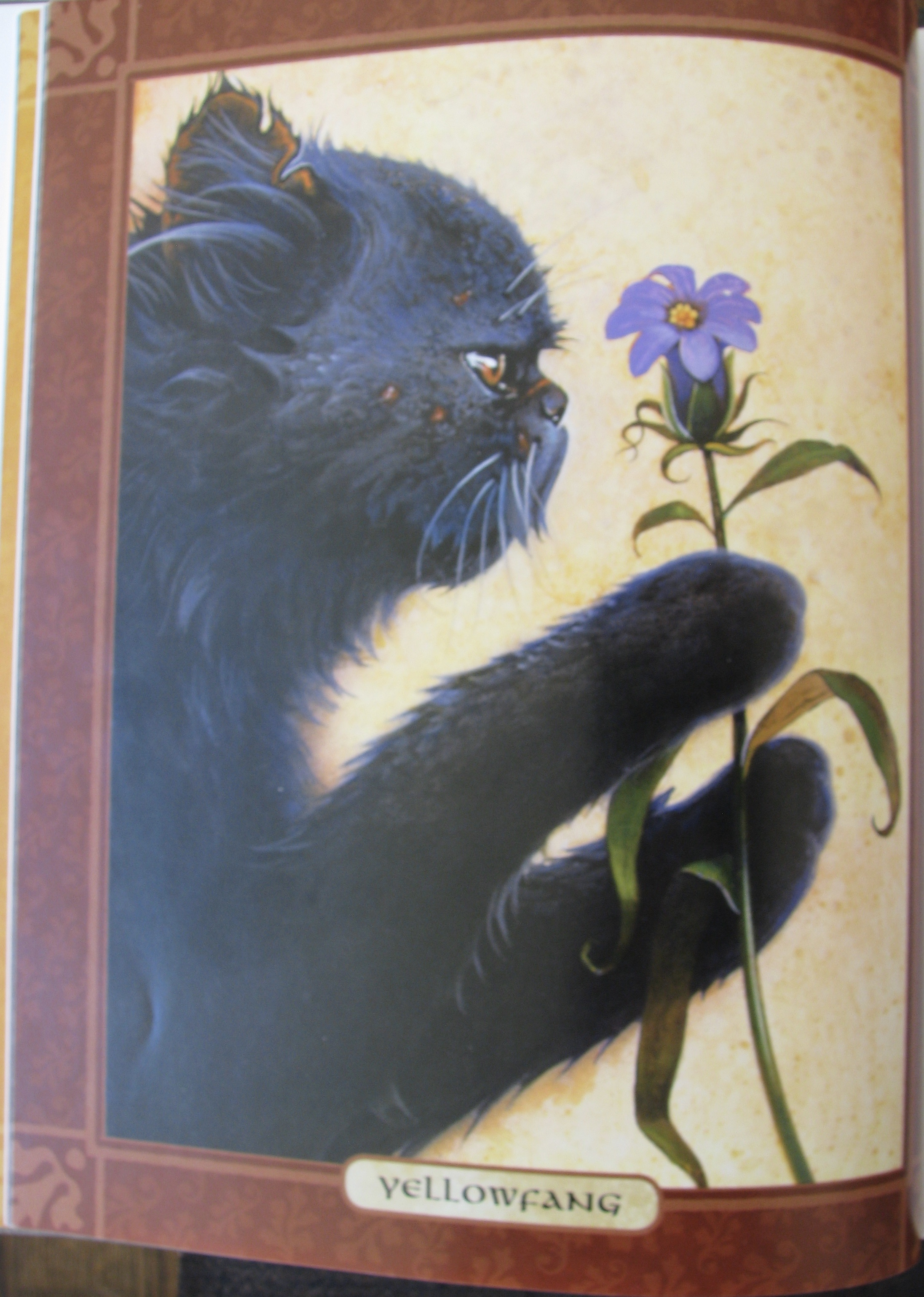 The Warrior Cats Series By Erin Hunter Cat Opedia