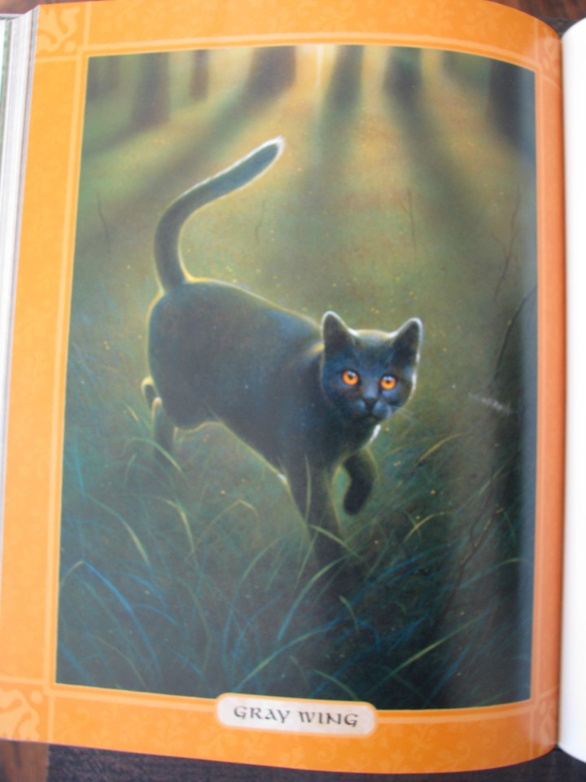 Warrior cat Gray Wing gray cat orange eyes