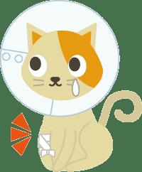 ケガをした猫のイラスト