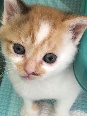 保護猫あかりちゃん05