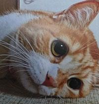 迷い猫のみちゃこ