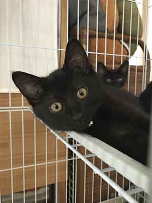 保護猫ルフィー02