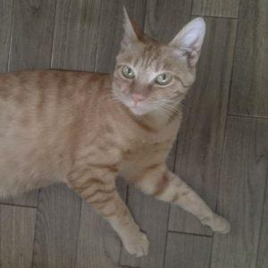 保護猫ティオ君03