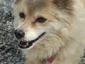 保護犬ポポちゃん