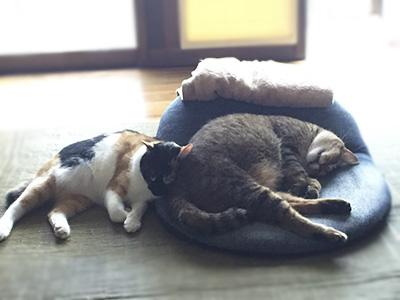 おはなちゃんと先住猫さん003