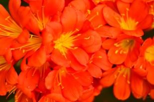 flowers4_s