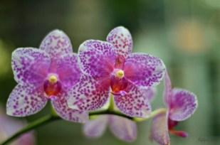 flowers9_s