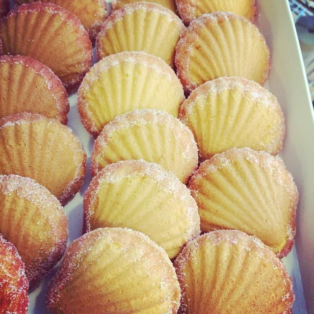 Pink Shells Madeleines