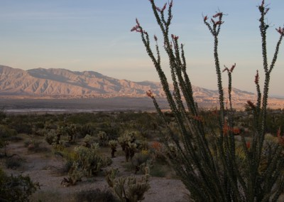 Flowering Ocotillo at sunset – Anza Borrego Desert