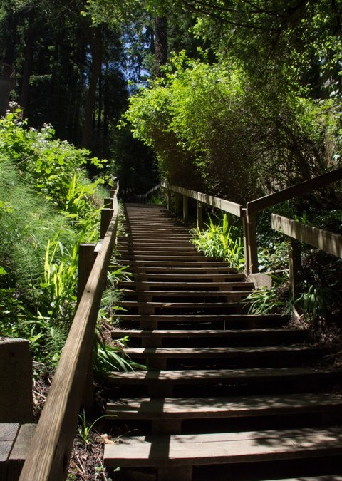 Dipsea Stairs – Halfway up first set