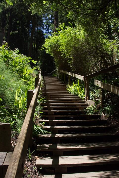 Dipsea Stairs - Halfway up first set - SKU: CA_DIP_0063