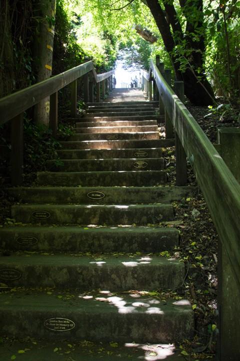 Dipsea Stairs - View of the top - SKU: CA_DIP_0065