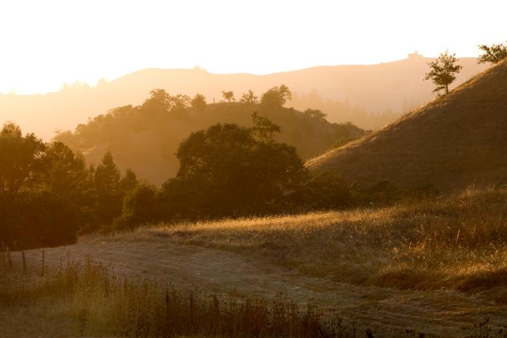 San Geronimo Valley golden hills
