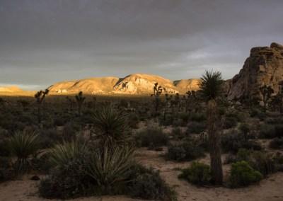 Joshua Tree golden light on distant mountains