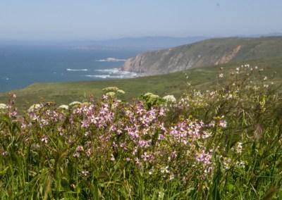 Spring wildflowers of Point Reyes
