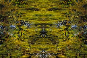 Tracing Forest Ghost III (2011) 90 x 60 cm C-Print