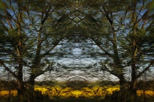 Tracing Forest Ghost VIII (2011) 90 x 60 cm C-Print