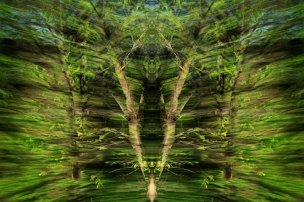 Tracing Forest Ghost IX (2011) 90 x 60 cm C-Print