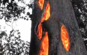نيران تخرج من شجرة دون أن تحترق