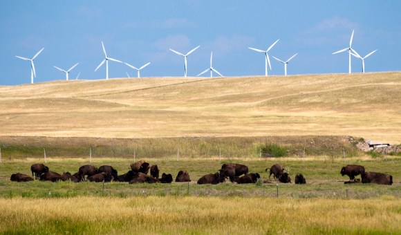 Bison and Wind Turbines in Wyoming