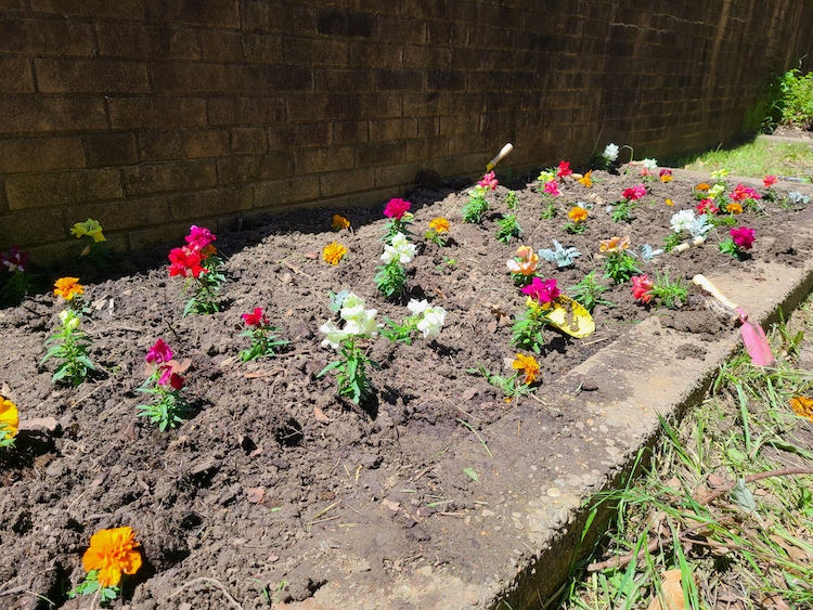 newly planted flowers