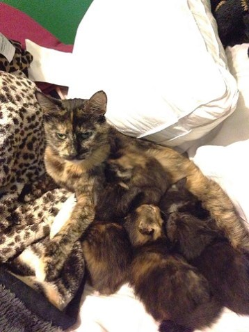 Sugar and her litter
