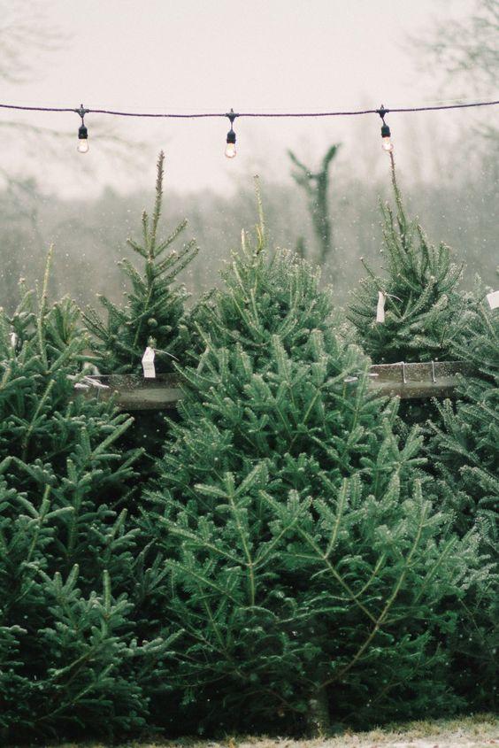 christmas tree farms to visit around atlanta georgia - Christmas Tree Farm Colorado