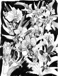 Weekly Sketch – Orchid Medley – 28/01/2013