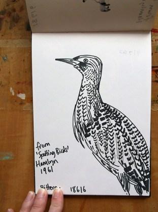 Bittern, pen drawing © Catherine Cronin