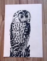 Tawny owl black pen sketch A4 © Catherine Cronin