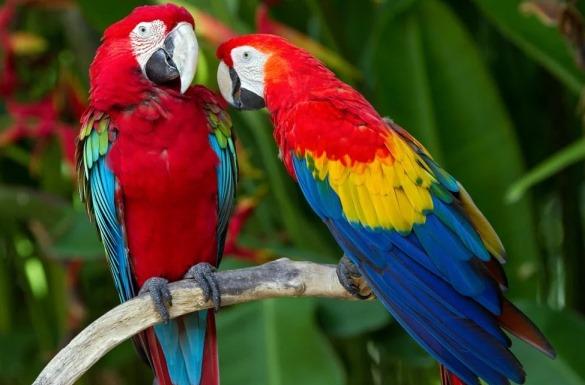 Передержка попугаев