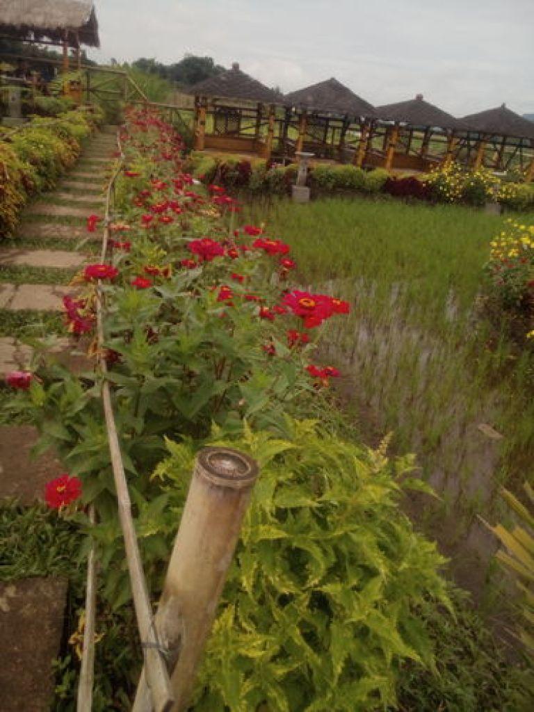 Bunga bersanding dengan tanaman padi