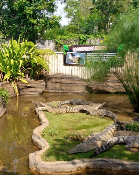 taman buaya predator fun park