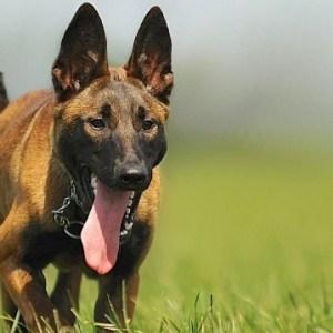 Waspada Rabies, Lakukan 4 Langkah Penanganan Infeksi Akibat Gigitan Anjing