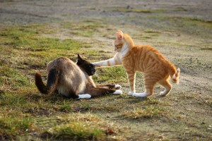 It's Face Punch Friday Here At CatBagz.com. Get Your Face Ready, Cause It Is Gettin' Punchy In Here.