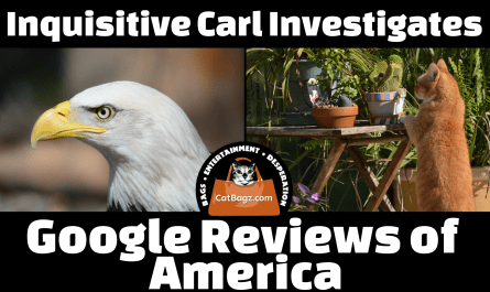 Inquisitive Carl Investigates Google Reviews of America