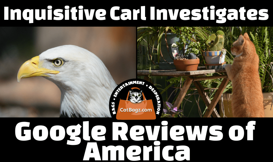 Inquisitive Carl Investigates: Google Reviews of America