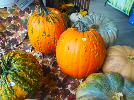 Pumpkins for sale at the Hands & Harvest Fall Foliage Festival in Monterey
