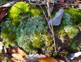 moss & twigs