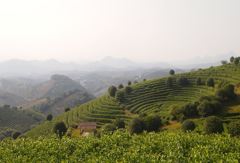 the seven star tea plantation and return to yangshuo (5/6)