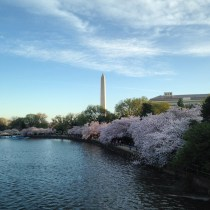 Cherry Blossoms & the Washington Monument