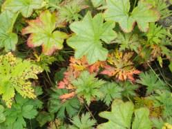 foliage around Tvisongur sound sculpture