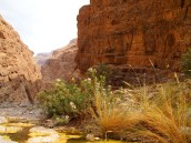 """Come forth into the light of things, let nature be your teacher.""~ William Wordsworth (Wadi Muyadin, Oman)"