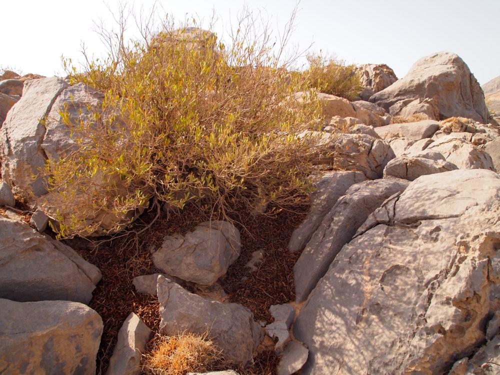 the road to jebel harim: petroglyphs, mountain views & graveyards (3/6)