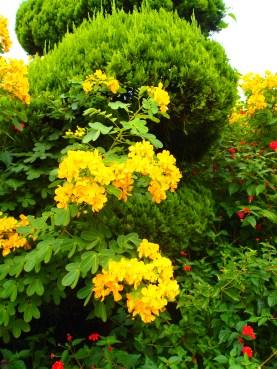 gardens near Geoje-do, South Korea