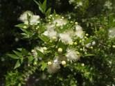 flowers in Wekan, Oman